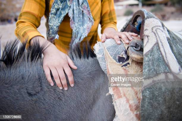 a female toursist makes a friend with a local donkey in petra. - jordanian workforce stock pictures, royalty-free photos & images