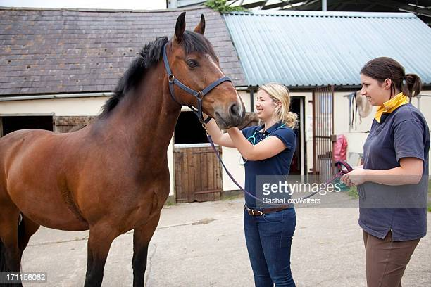 A female vet conducting an examination on a horse