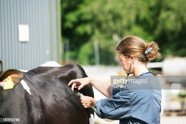 Female veterinarian at work