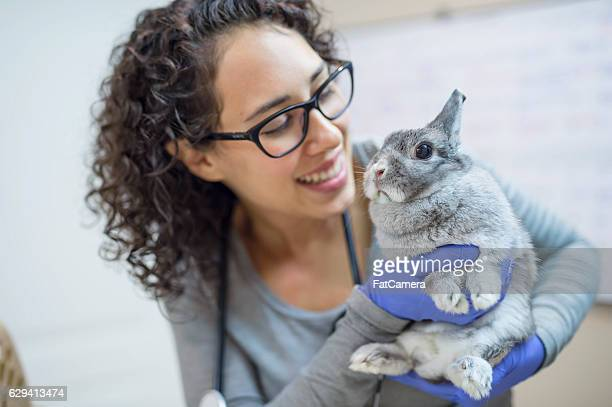 Female veterinarian holding a bunny for a checkup