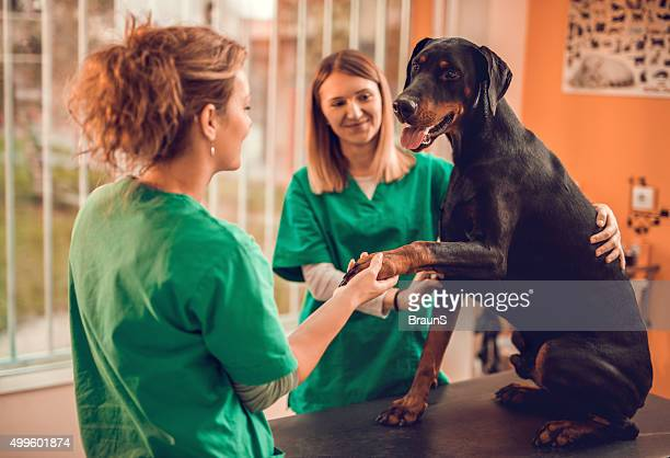 Female veterinarians with a purebred dog at vet's office.