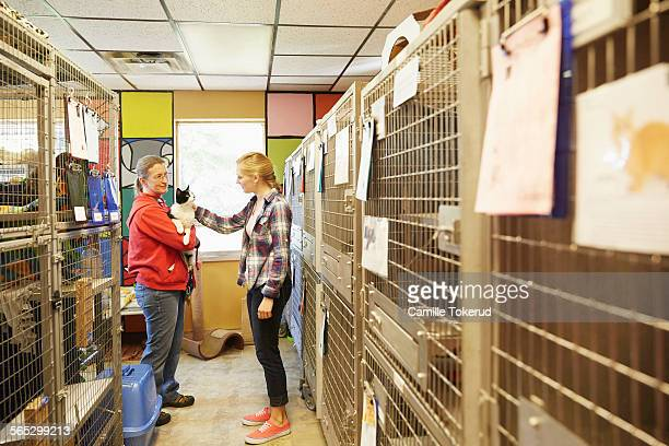 Female volunteer petting a cat at an animal shelte