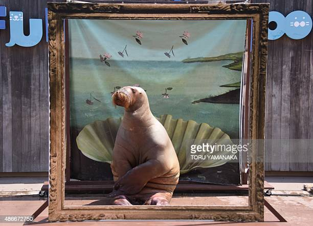 A female walrus poses as a painting of 'The Birth of Venus by Sandro Botticelli' during her performance show at the Yokohama Hakkeijima Sea Paradise...