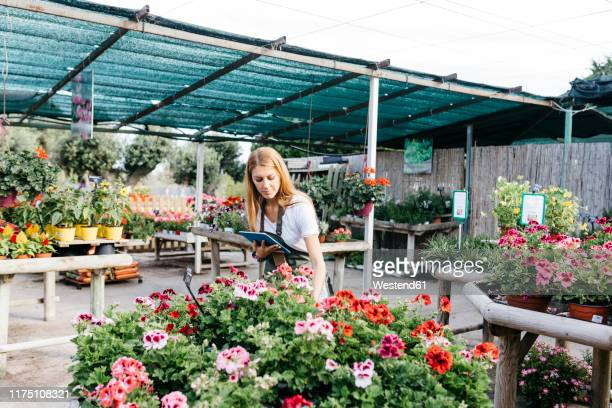 female worker in a garden center with a tablet caring for flowers - 植物園 ストックフォトと画像
