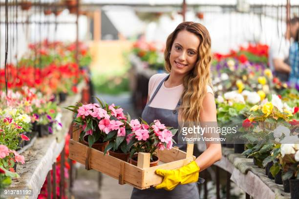 female worker in greenhouse holding a crate with flowers - green fingers stock pictures, royalty-free photos & images