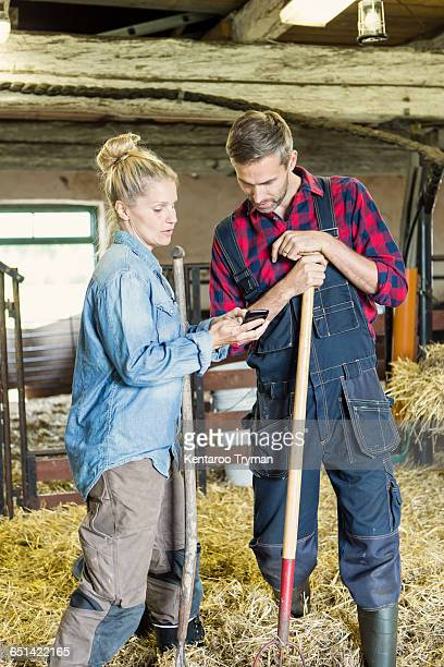 Female worker showing phone to man amidst hay at barn