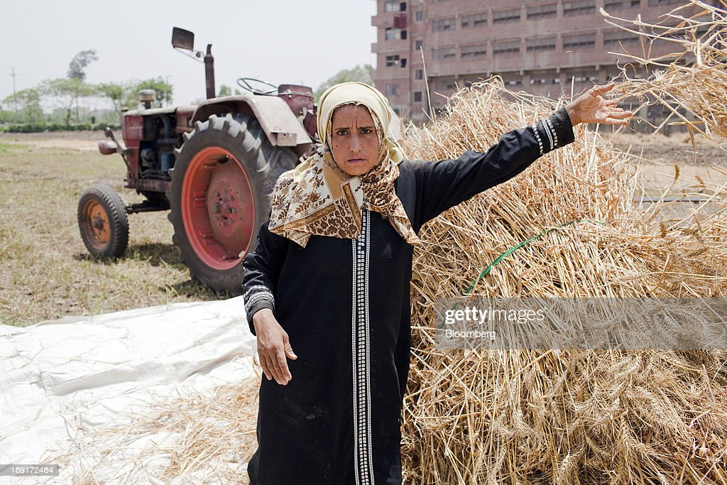 A female worker sorts bundles of wheat harvested from a field in Monofeya, Egypt, on Sunday, May 19, 2013. Egypt will curb wheat imports by 31 percent to 8 million metric tons in 2012-13, still enough to make it the world's biggest buyer, the U.S. Department of Agriculture estimates. Photographer: Shawn Baldwin/Bloomberg via Getty Images