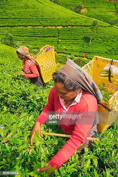 Female Workers in Tea Plantations of Sri Lanka
