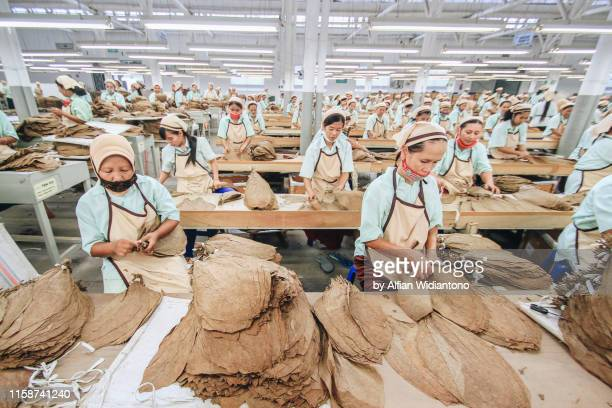female workers in tobacco factory - uniform cap stock pictures, royalty-free photos & images
