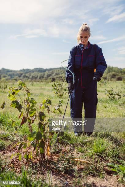 Female Working in Hazelnut Orchard
