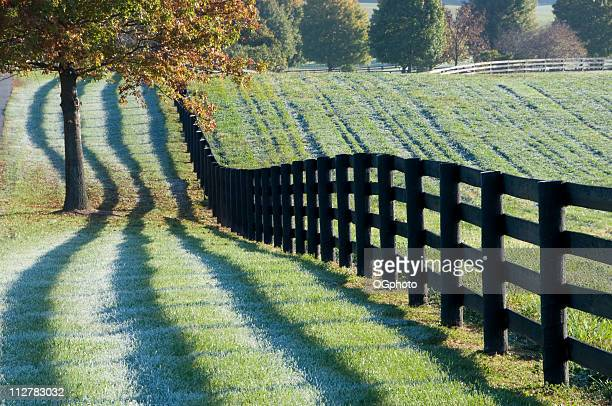 fence and shadows in the early morning - ogphoto stock photos and pictures