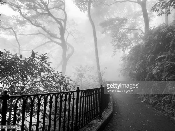 fence by trees during foggy weather - jesse stock pictures, royalty-free photos & images