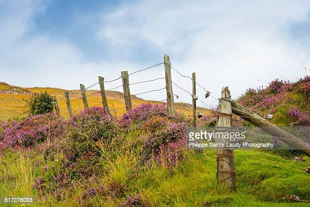 fence heather - erika sainte stock-fotos und bilder