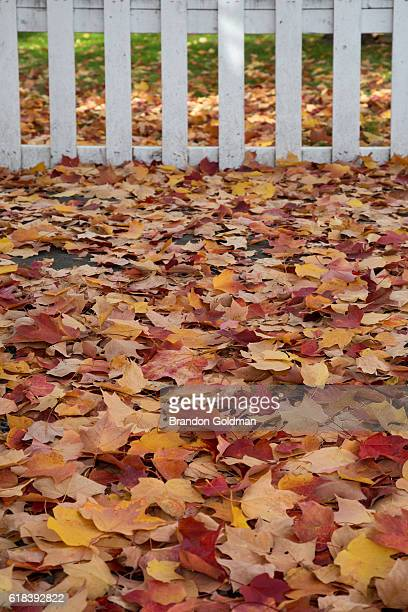 fence in fall - laubbaum stock-fotos und bilder