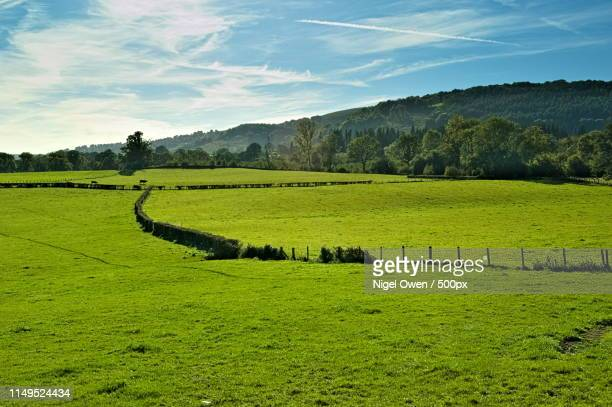 fence line - nigel owen stock pictures, royalty-free photos & images