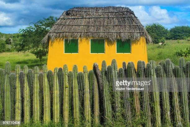 fence made of living cactus against yellow cabin with thatch roof, caribbean islands - caribisch nederland stockfoto's en -beelden