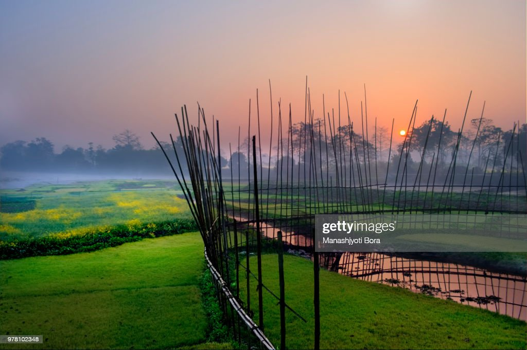 Fence on cropland at sunrise, Assam, India : Stock Photo