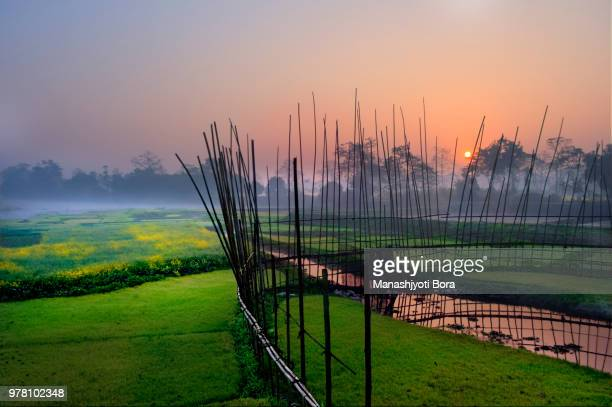 Fence on cropland at sunrise, Assam, India