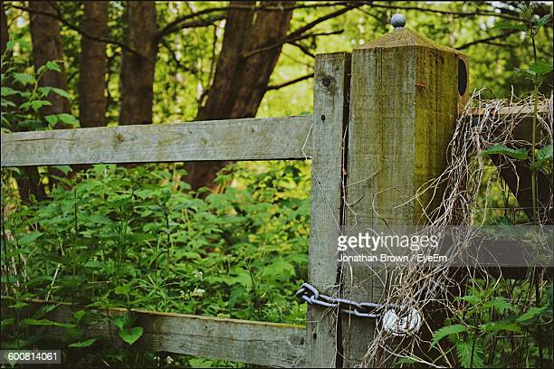 Fence With Padlock At Forest