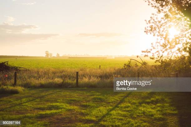 Fenceline, tree, and sunlit field