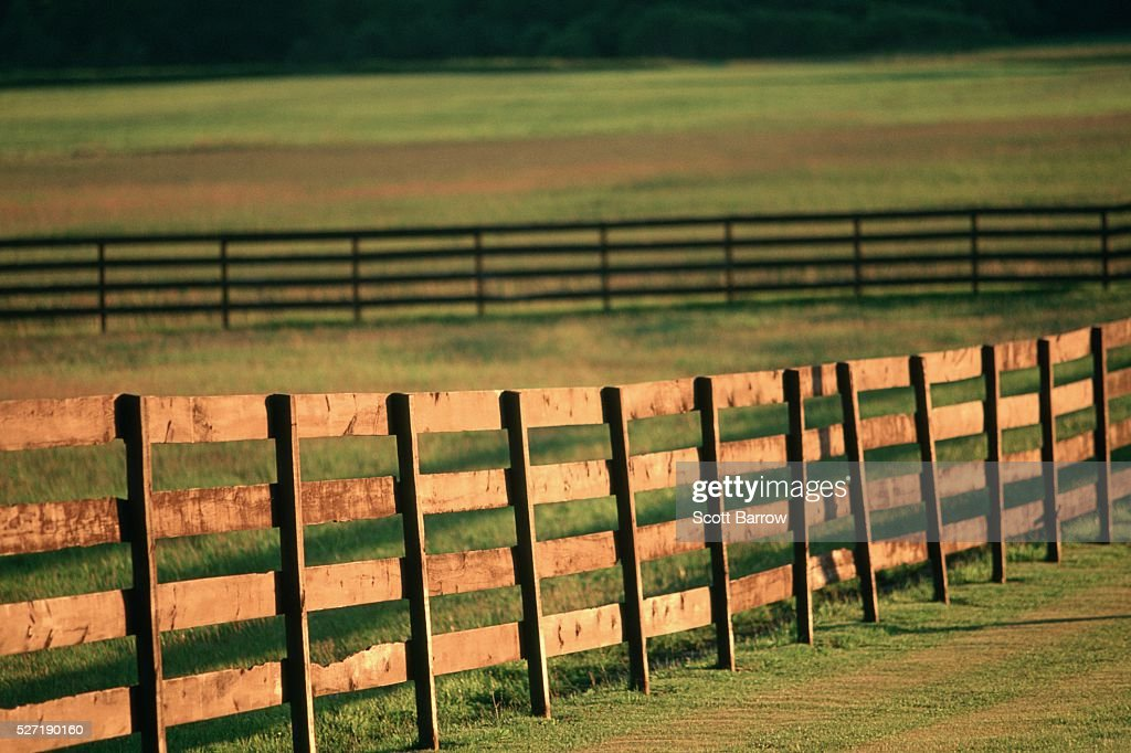 Fences in a pasture : Stock Photo