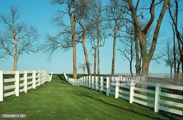 fences on horse farm - lexington kentucky stock pictures, royalty-free photos & images