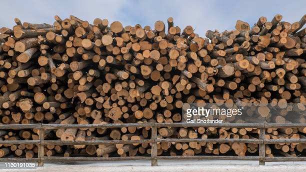Fencing in the Lumber Logs