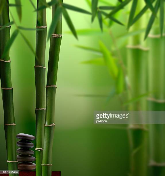 Feng-Shui Jungle