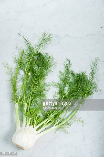 Fennel bulb with fronds