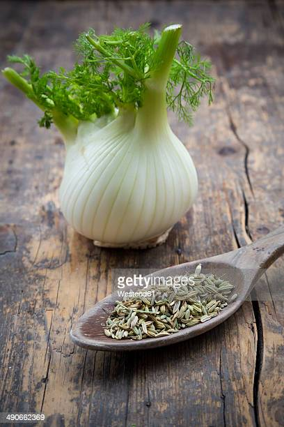 Fennel corm and wooden spoon of fennel seeds (Foeniculum vulgare) on wooden table