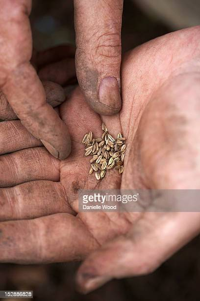 Fennel Seeds in hand