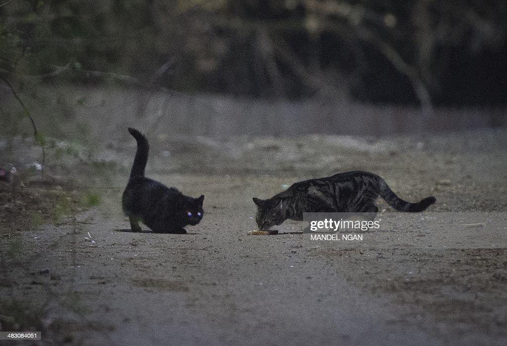 US-ANIMALS-POPULATION-SPAY-NEUTER : News Photo