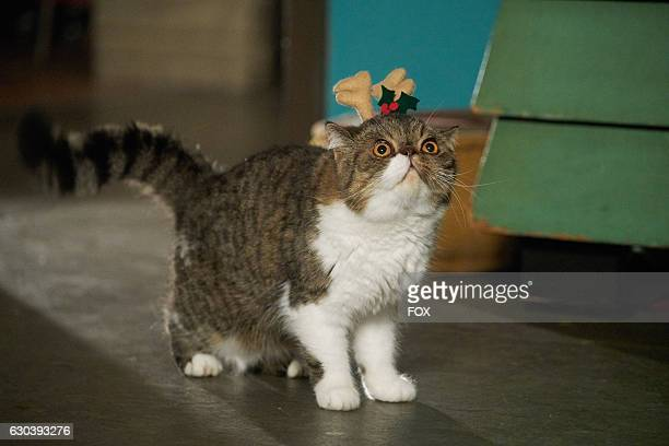 """Ferguson the cat in the """"Christmas Eve Eve"""" episode of NEW GIRL airing Tuesday, Dec. 13 on FOX."""