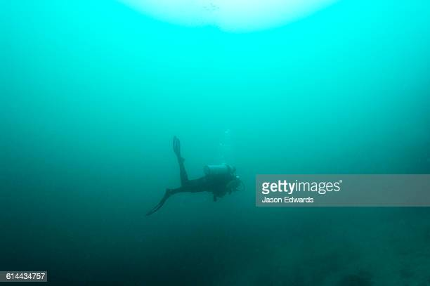 A scuba diver disappears into the murky depths blowing bubbles.