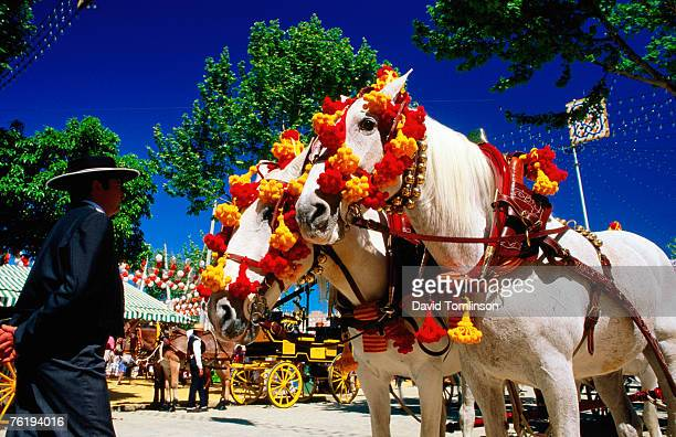 feria de abril (april fair) pair of horses decorated with colourful headgear, sevilla, andalucia, spain, europe - abril fotografías e imágenes de stock