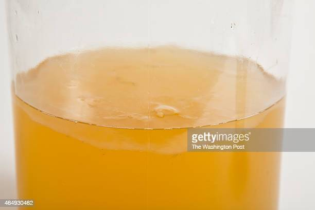 Fermenting Tea with Kombucha jelly like Culture known as SCOBY before being processed into one of Capital Kombucha's Beverages on August 26 2013 in...