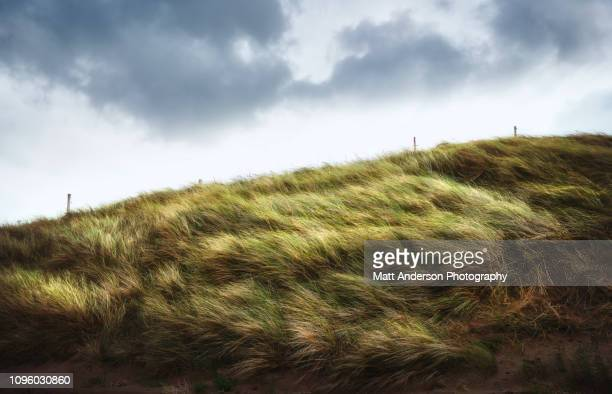 fermoyle fences and fields #3 - wind stock pictures, royalty-free photos & images