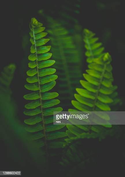 シダの背景 - khaki green ストックフォトと画像