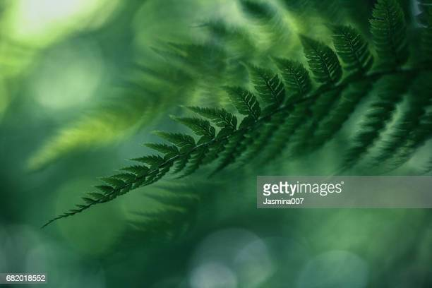 fern background - fern stock pictures, royalty-free photos & images