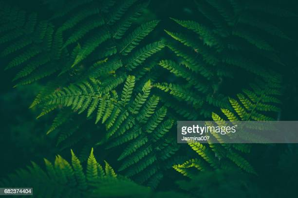 fern background - bush stock pictures, royalty-free photos & images
