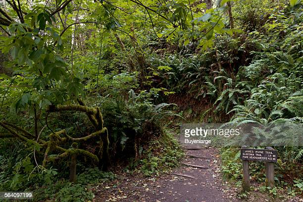 Fern Canyon is a canyon in the Prairie Creek Redwoods State Park in Humboldt County California