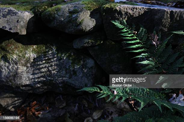 A fern casts it's shadow on a stone wall in Noanet Woodlands