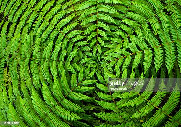 fern circle background - new zealand stock pictures, royalty-free photos & images
