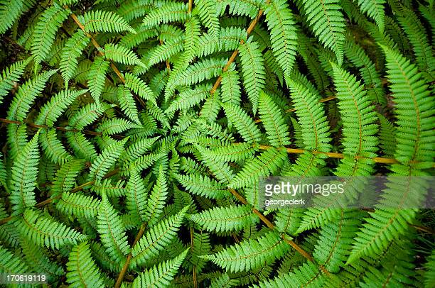 fern circle - green stock pictures, royalty-free photos & images