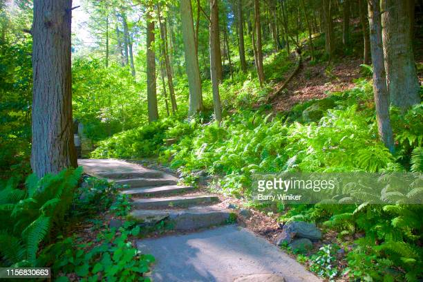 fern fronds in dappled sunlight on hillside at kent falls, ct - barry wood stock pictures, royalty-free photos & images