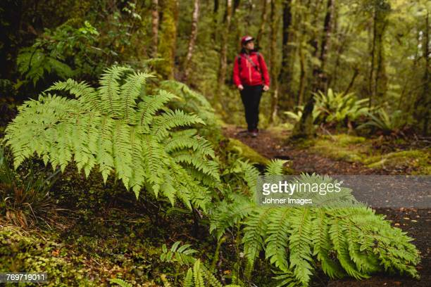 Fern in forest