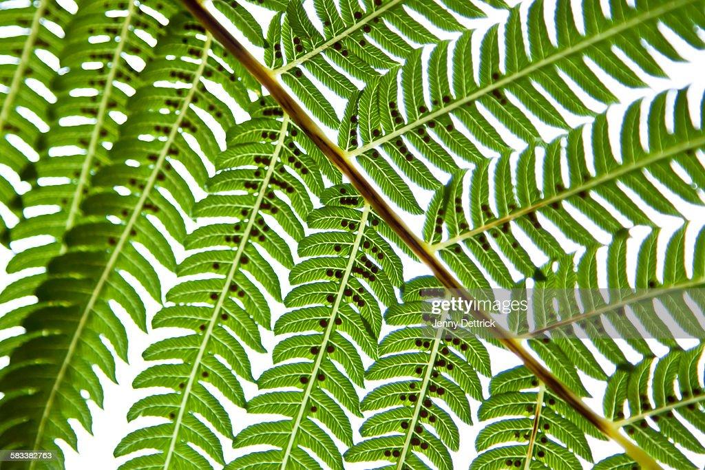 Fern leaf detail : Stock Photo