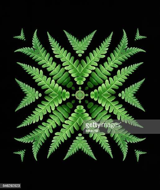 Fern leaf mandala pattern