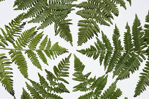 Fern leaves forming circle