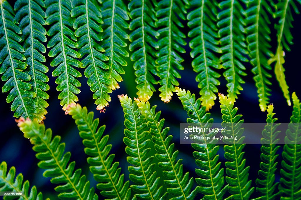 Fern Leaves Touching One Another : Foto stock